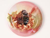 Viečko plechové ružové+včela 66mm